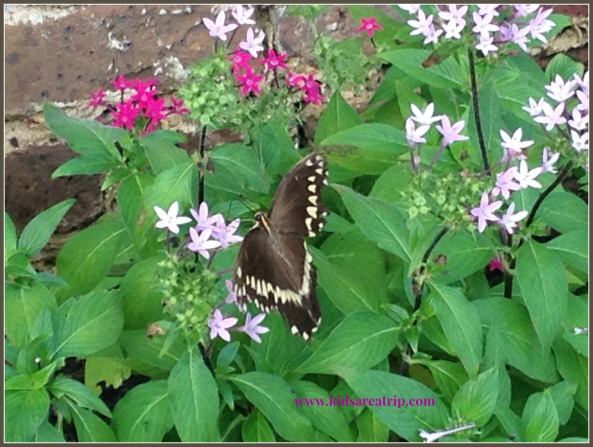 Spring Butterfly Flowers